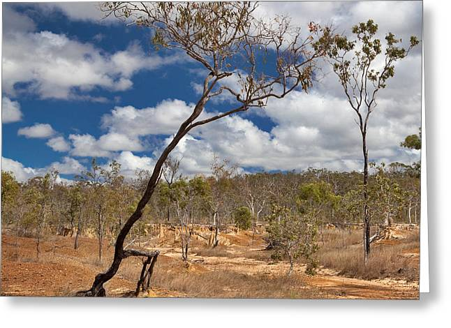 Desertification Greeting Cards - Walking Treesoil Erosion  By Overgrazing Greeting Card by Dirk Ercken