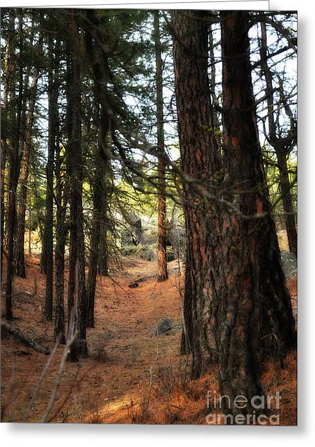 Spokane Greeting Cards - Walking under the trees Greeting Card by Ana Lusi