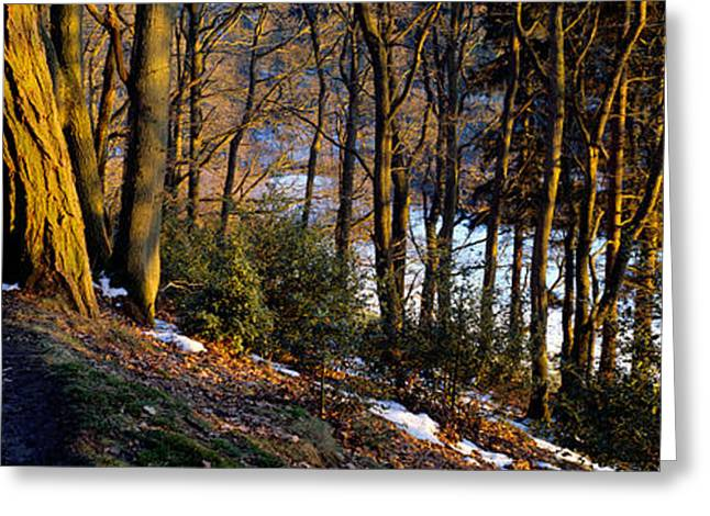 Walkway Passing Through The Forest Greeting Card by Panoramic Images