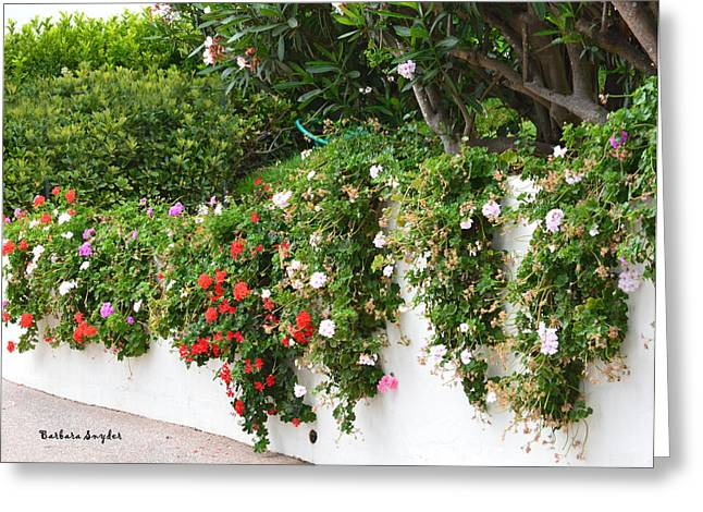 Potted Plant Digital Art Greeting Cards - Wall Flowers Greeting Card by Barbara Snyder