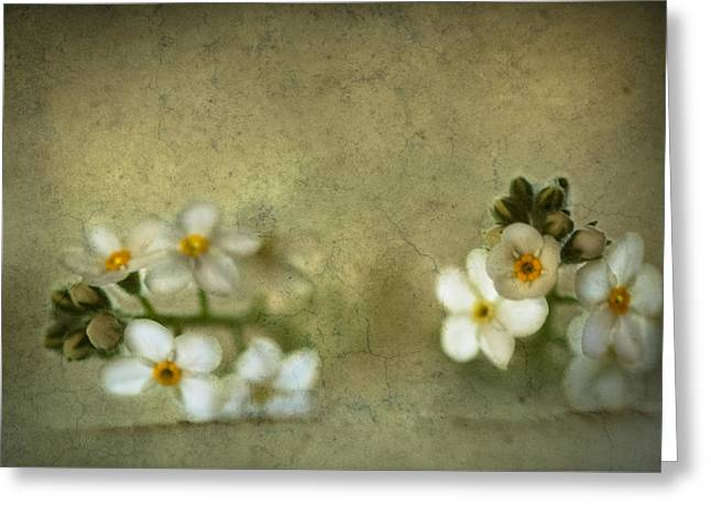 """forget Me Not"" Greeting Cards - Wall flowers Greeting Card by Constance Fein Harding"