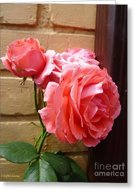 Screen Doors Greeting Cards - Wall Rose Greeting Card by Lingfai Leung