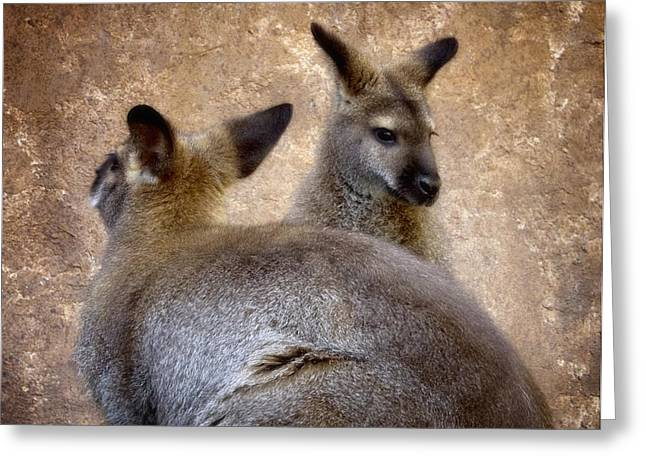 Marsupial Greeting Cards - Wallabies Greeting Card by Ellen Heaverlo
