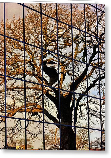 Adam Baldwin Greeting Cards - Wallace Reflection  Greeting Card by Jon Baldwin  Art