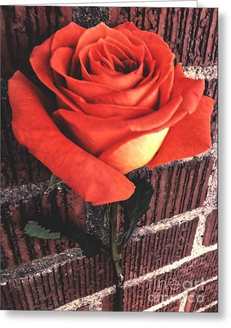 Photography Greeting Cards - Wallflower Greeting Card by Charlie Cliques