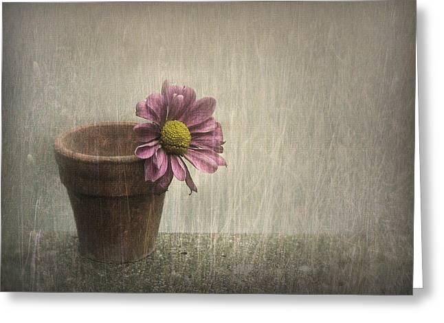 Flowerpot Greeting Cards - Wallflower Greeting Card by Jennifer Woodward
