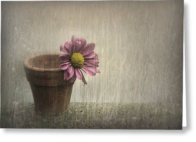 Pink Digital Greeting Cards - Wallflower Greeting Card by Jennifer Woodward