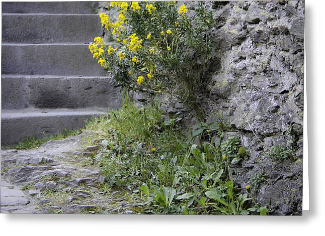 Stepping Stones Greeting Cards - Wallflowers at Marksburg Castle Greeting Card by Teresa Mucha