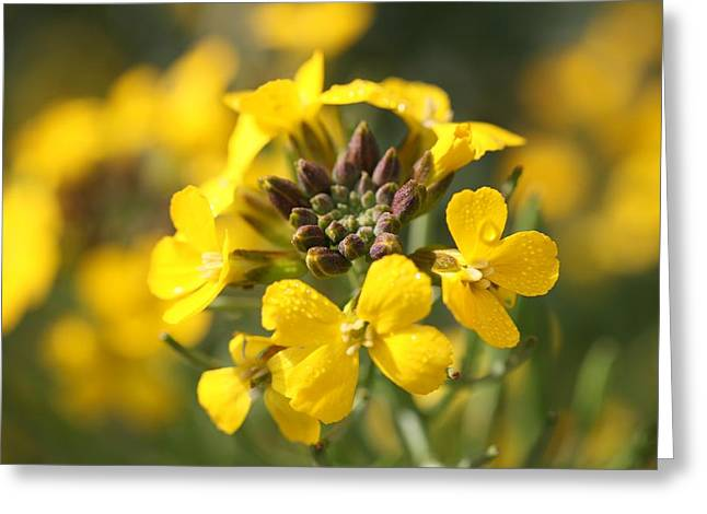 Mark Severn Greeting Cards - Wallflowers Greeting Card by Mark Severn