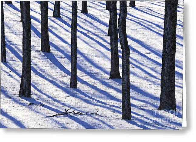 Rural Indiana Greeting Cards - Walnut Grove - D008831 Greeting Card by Daniel Dempster