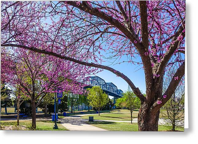Chattanooga Tn Greeting Cards - Walnut Street Bridge in Spring Greeting Card by Tom and Pat Cory