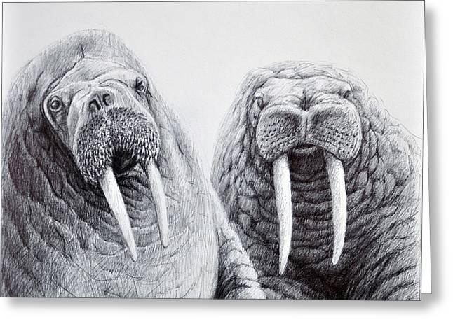 Sea Lions Drawings Greeting Cards - Walrus Buddies Greeting Card by Rick Hansen