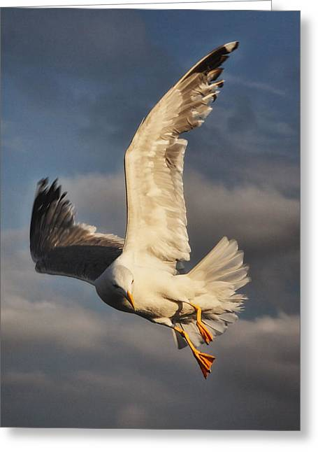 Waltz Of The Seagull Greeting Card by Vasilis Miltiadis