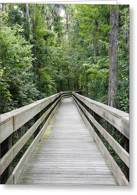 Polk County Florida Greeting Cards - Wander Greeting Card by Laurie Perry