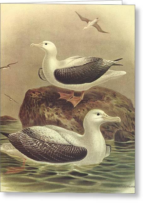Wandering Albatross Greeting Card by J G Keulemans