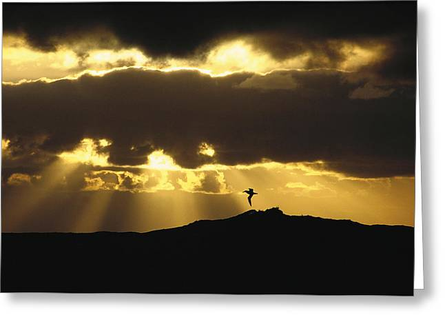 Wandering Albatross Over Drake Passage Greeting Card by Colin Monteath