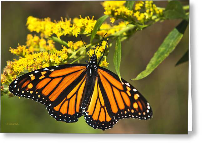 Danaus Plexippus Greeting Cards - Wandering Migrant Butterfly Greeting Card by Christina Rollo