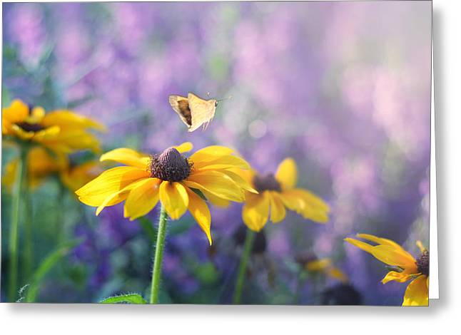 Butterfly On Flower Greeting Cards - Wanderlust Greeting Card by Amy Tyler