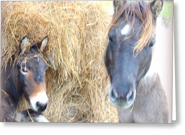 Psychiatric Greeting Cards - Want Some Hay Greeting Card by Hilde Widerberg