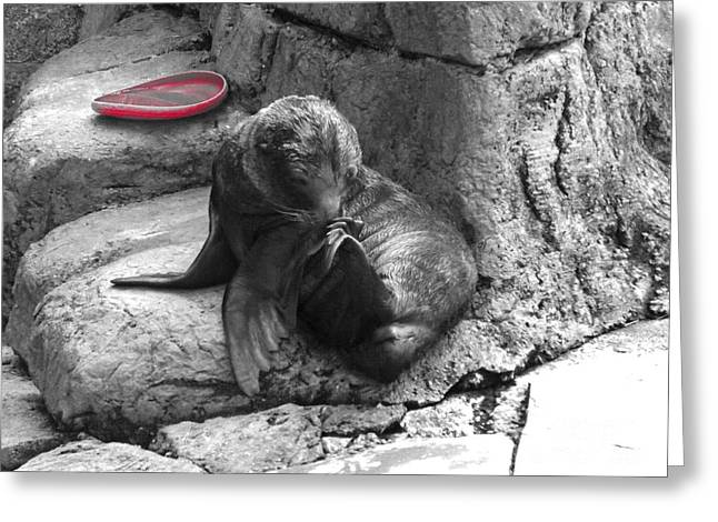 Pittsburgh Zoo Greeting Cards - Want To Play Greeting Card by Chad Thompson