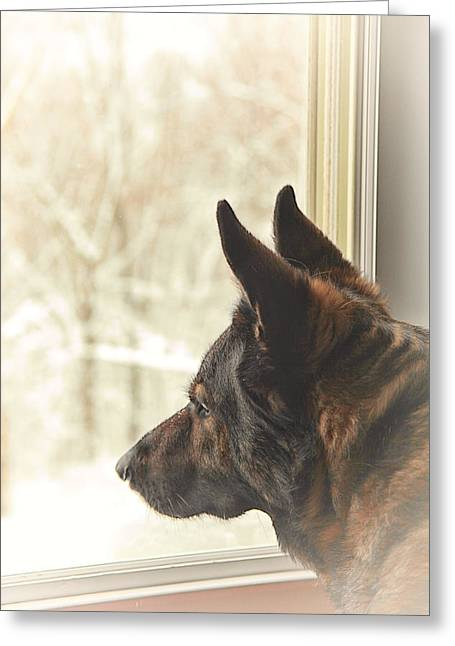 Guard Dog Greeting Cards - Wanting To Play Greeting Card by Karol  Livote