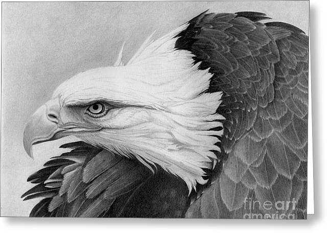 Print On Acrylic Drawings Greeting Cards - War Bird Greeting Card by Alan Palmer