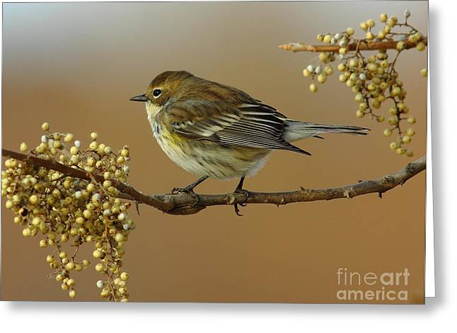 Resturant Art Greeting Cards - Yellow Rumped Warbler Greeting Card by Robert Frederick