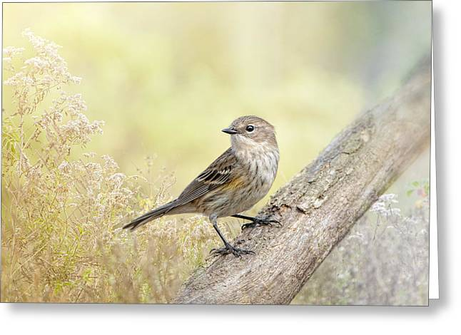 Warbler Photographs Greeting Cards - Warbler in Morning Light Greeting Card by Bonnie Barry