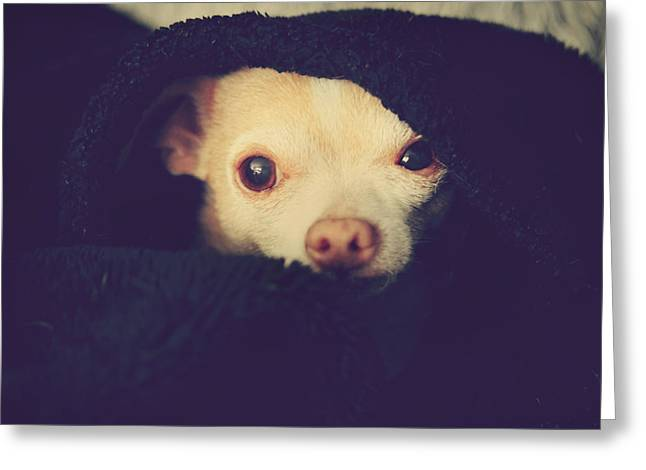 Chihuahua Portraits Greeting Cards - Warm and Cozy Greeting Card by Laurie Search