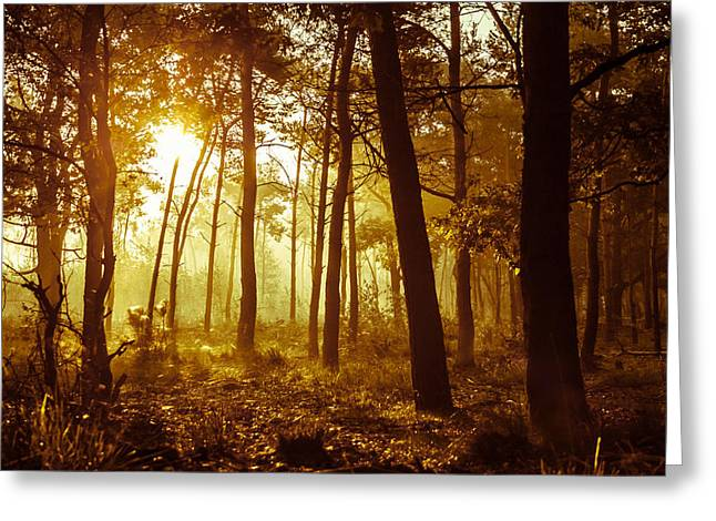 Esque Greeting Cards - Warm Autumn Morning Greeting Card by Semmick Photo