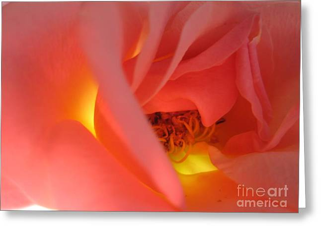 Texture Floral Drawings Greeting Cards - Warm Glow Pink Rose 2 Greeting Card by Tara  Shalton