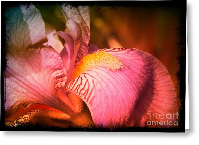 Iris Digital Art Greeting Cards - Warm Iris - Digital Art Greeting Card by Carol Groenen