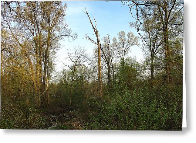 Peaceful Scene Greeting Cards - Warm Morning Light in the Tranquil Forest Greeting Card by Terrance DePietro
