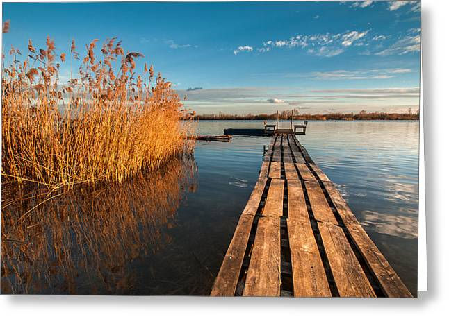Winter Photos Greeting Cards - Warm winter afternoon Greeting Card by Davorin Mance