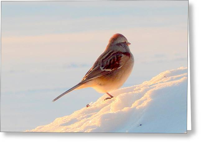Annapolis Valley Greeting Cards - Warming Up Greeting Card by Karen Cook