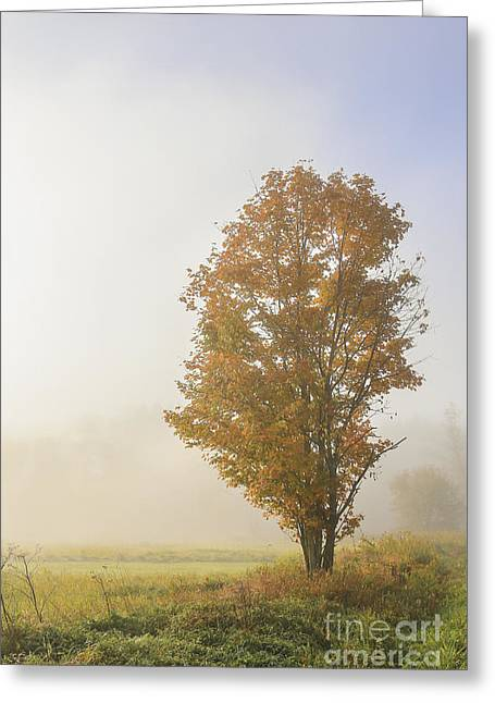 Foggy Landscape Greeting Cards - Warmth Greeting Card by Evelina Kremsdorf