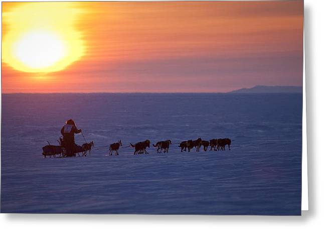 Sled Dog Greeting Cards - Warren Palfrey On The Trail At Sunset 7 Greeting Card by Jeff Schultz