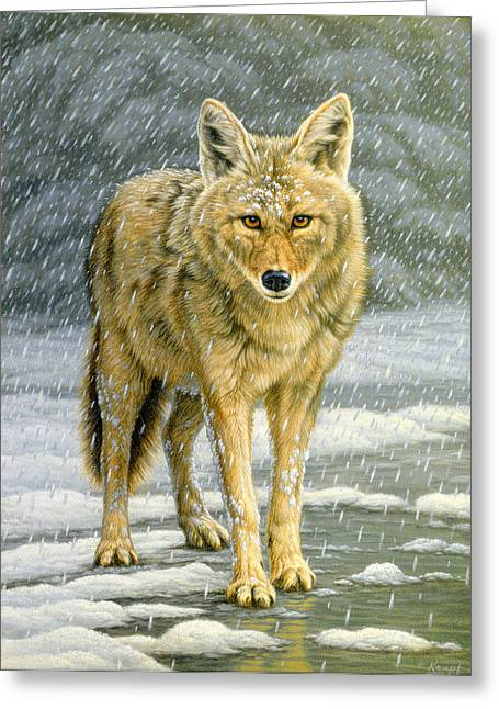 Coyote Greeting Cards - Wary Approach - coyote Greeting Card by Paul Krapf