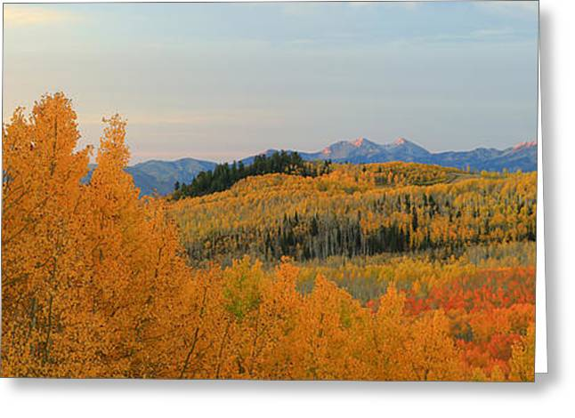 Fall Splendor Greeting Cards - Wasatch Gold Greeting Card by Johnny Adolphson