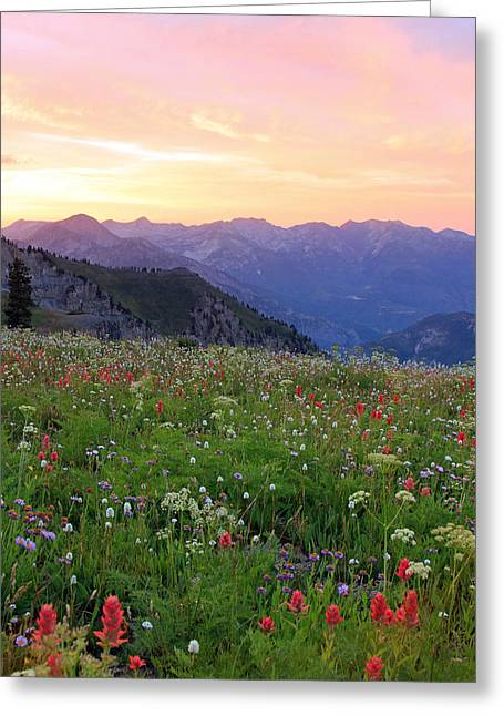 Amazing Sunset Greeting Cards - Wasatch Sunset with Wildflowers Greeting Card by Johnny Adolphson