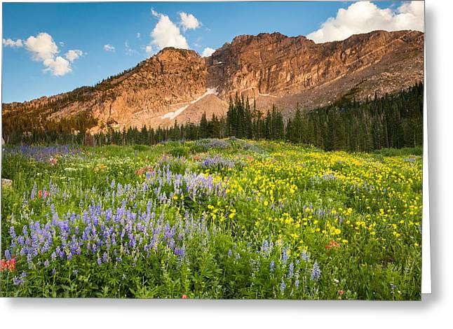Little Cottonwood Canyon Greeting Cards - Wasatch Wildflowers Greeting Card by Rory Wallwork