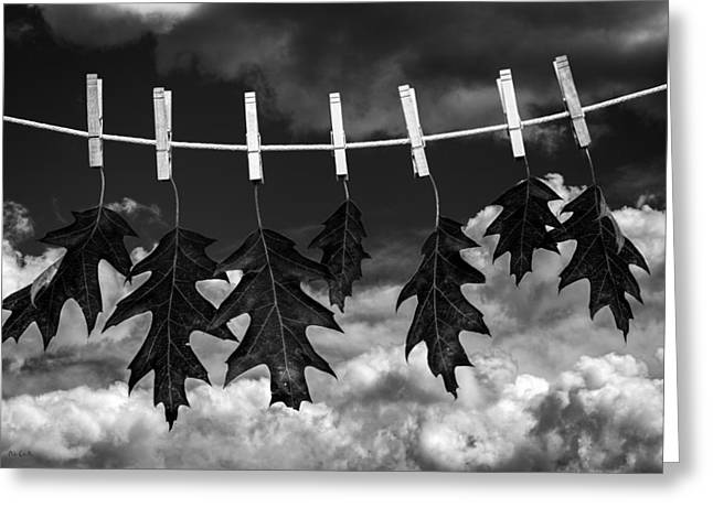 Fame Shop Greeting Cards - Wash Day Greeting Card by Bob Orsillo