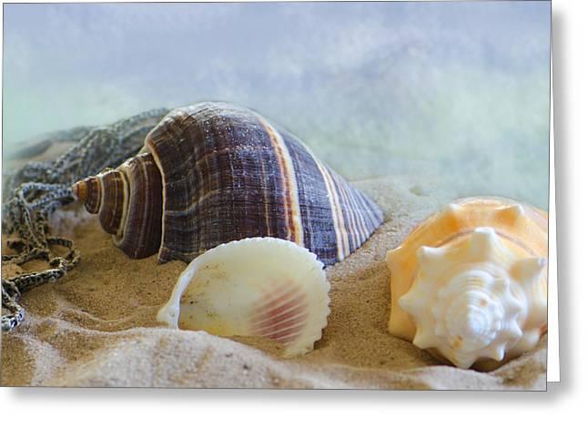 Seashells Digital Greeting Cards - Washed Ashore Greeting Card by Betty LaRue