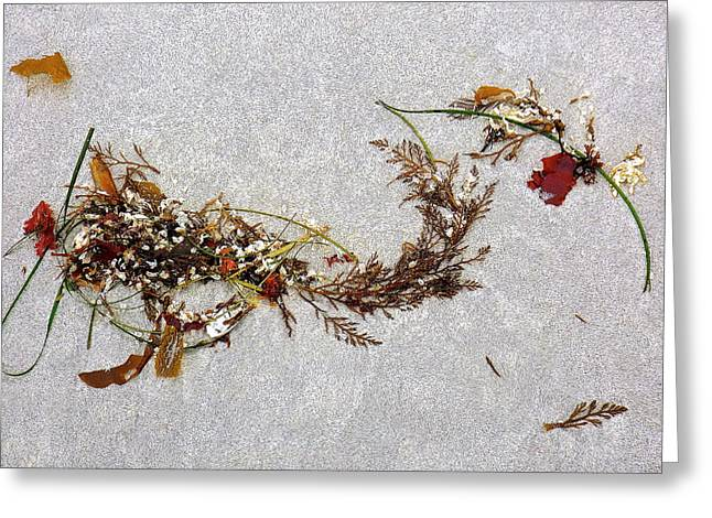My Ocean Greeting Cards - Washed-Up Art-  19 Greeting Card by My Lens and Eye   - Judy Mullan -