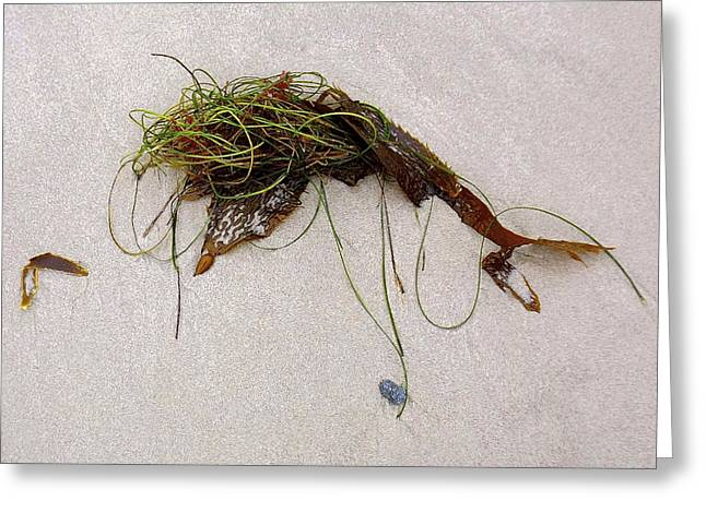 My Ocean Greeting Cards - Washed-Up Art- 15 Greeting Card by My Lens and Eye   - Judy Mullan -