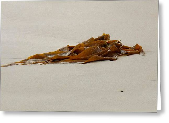 My Ocean Greeting Cards - Washed-Up Art-  8 Greeting Card by My Lens and Eye   - Judy Mullan -