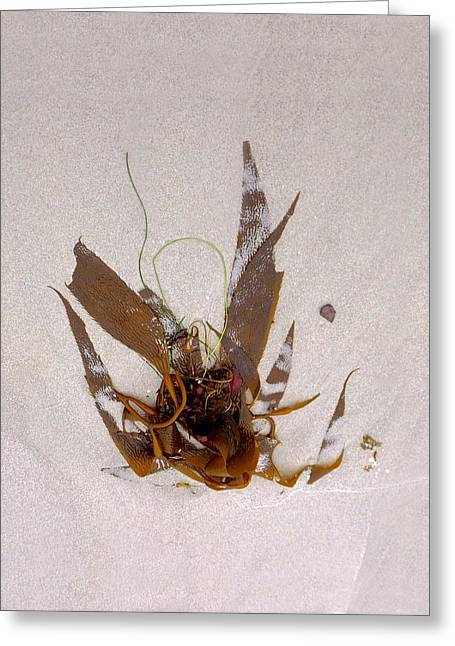 My Ocean Greeting Cards - Washed-Up Art- 3 Greeting Card by My Lens and Eye   - Judy Mullan -