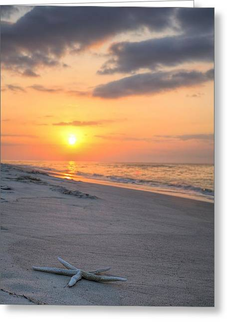 Florida Panhandle Greeting Cards - Washed Up V Greeting Card by JC Findley