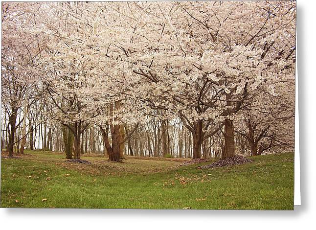 Kim Photographs Greeting Cards - Washington DC Cherry Blossoms Greeting Card by Kim Hojnacki
