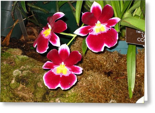 Washington DC - US Botanic Garden. - 121215 Greeting Card by DC Photographer